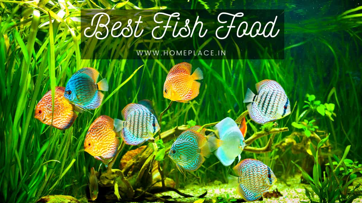 best fish frood brand in India